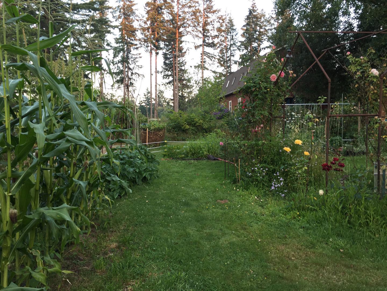 A lush garden