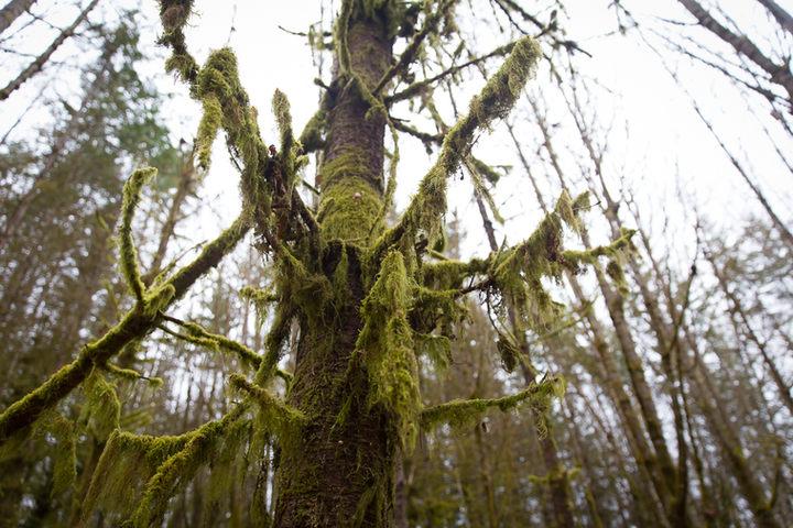Forestland wonder