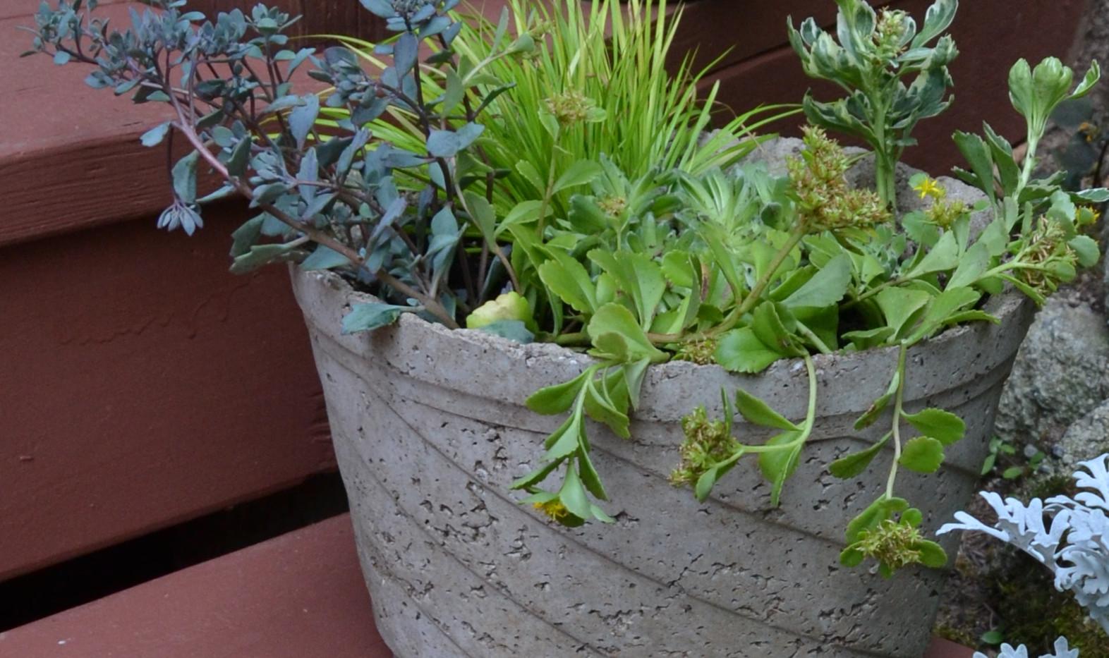 Succulent garden in handmade hypertufa pot. Prices range from $15 to $25