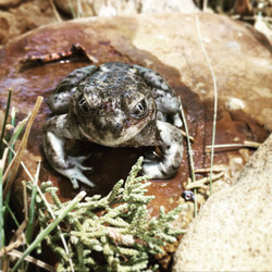 Toads near the camps