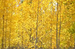 Fall near Navajo Lake