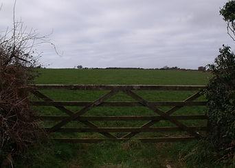 APAAN 04 St Erth RSS Station field.jpg