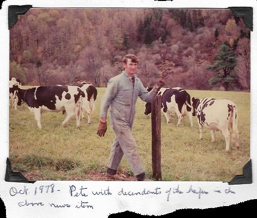 Dairy Farm History