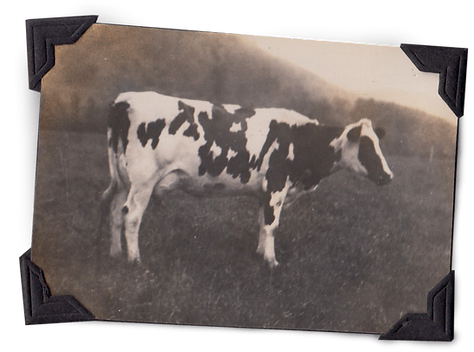 diary farm cow historic