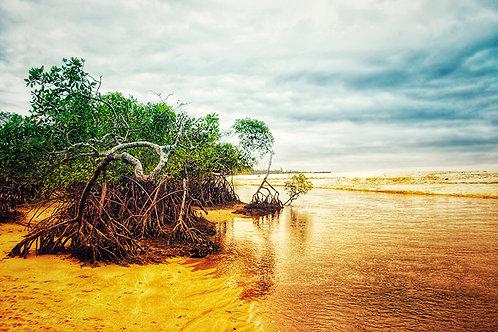 O mangue é sempre um ambiente com tanta vida... o mangue sugere vida... um cheiro forte alí dentro e muita vida se mexendo...