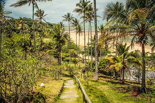 Os coqueirais nas areias brancas e finas da Praia do Espelho, no sul da Bahia