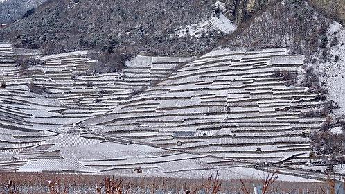 Vignes d'hiver-Chamoson