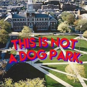 Students say dog walkers on Howard campus are desecrating hallowed ground (Washington Post)