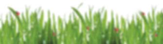 Dew Grass Image With Ladybird.jpg