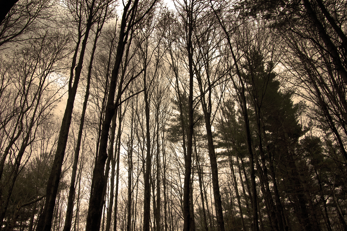 trees+warm