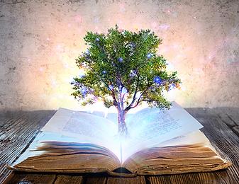Lectura de Registros Akáshicos, lectura de tu libro de la vida.