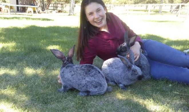 Market rabbits