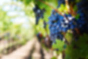 REAGRON - Grape2