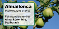Almailonca