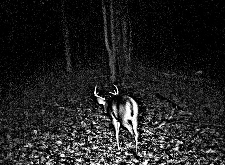 """HUNTING THE INFAMOUS """"OCTOBER LULL"""""""