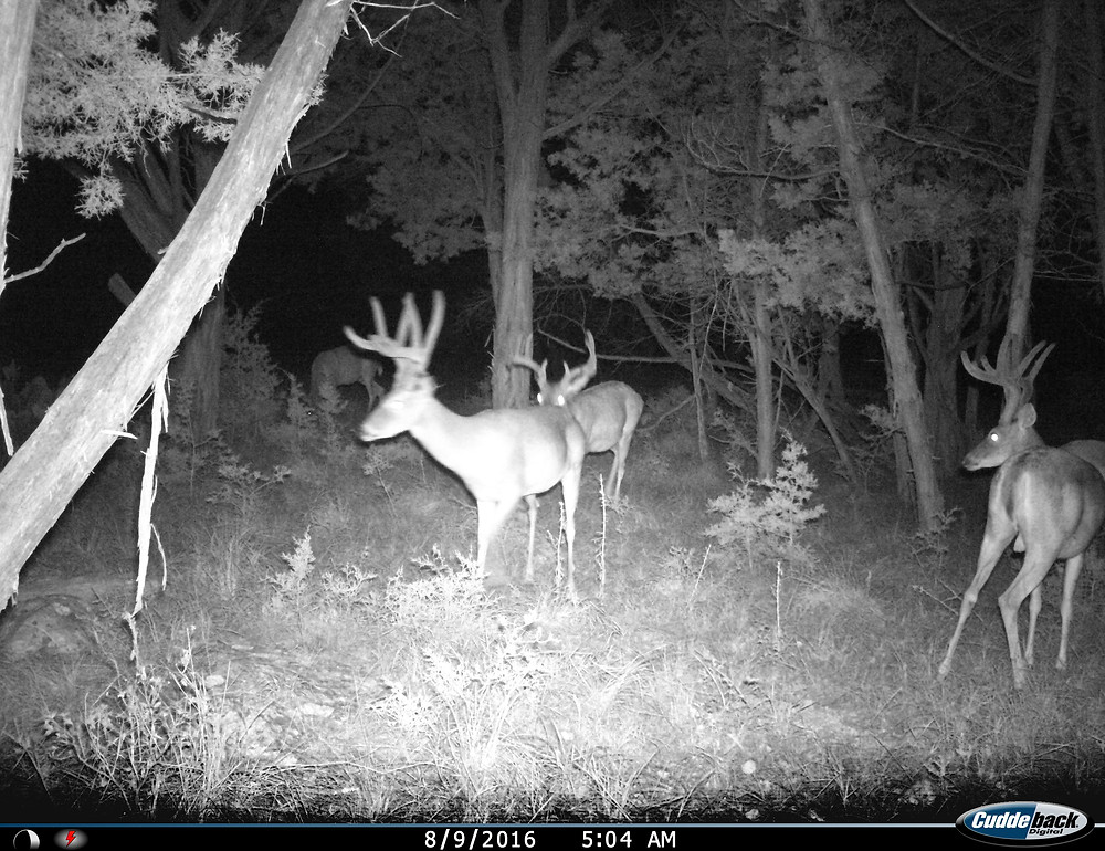 whitetail hunting, bucks, deer hunting