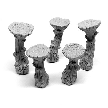 Cave Mushrooms