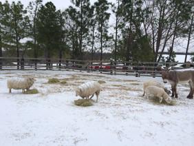 Alfalfa Treats on a snow day!