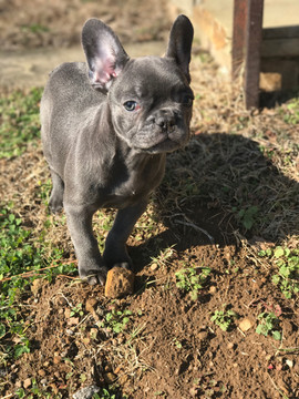 Eevie as a Puppy