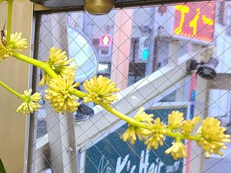 【花が咲いた🌷】