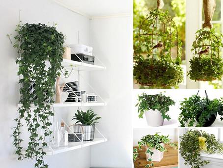 Decoração: 5 fortes razões para utilizar plantas naturais
