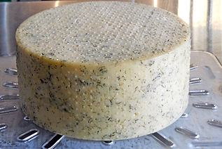A Young Wheel of Red Gable Cheese