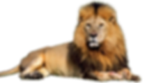 lion-and-den-png-lion-png-1366.png