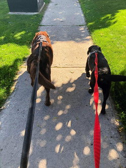 Josie and Charlie participating in the Walk for Dog Guides 2021