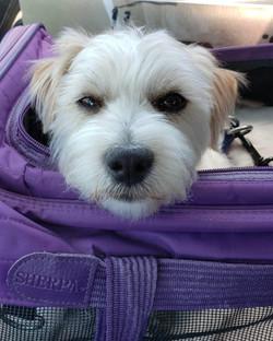 Dog Stella looking so cute.