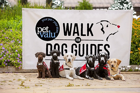 Pet Valu Walk for Dog Guides image with a banner and 6 service dogs from all different programs