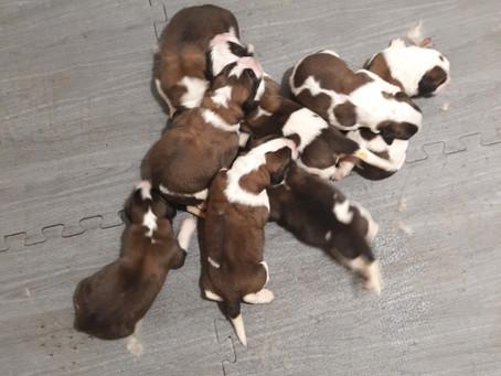 We've Got Puppies!