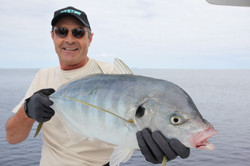 Trevally at the Kings
