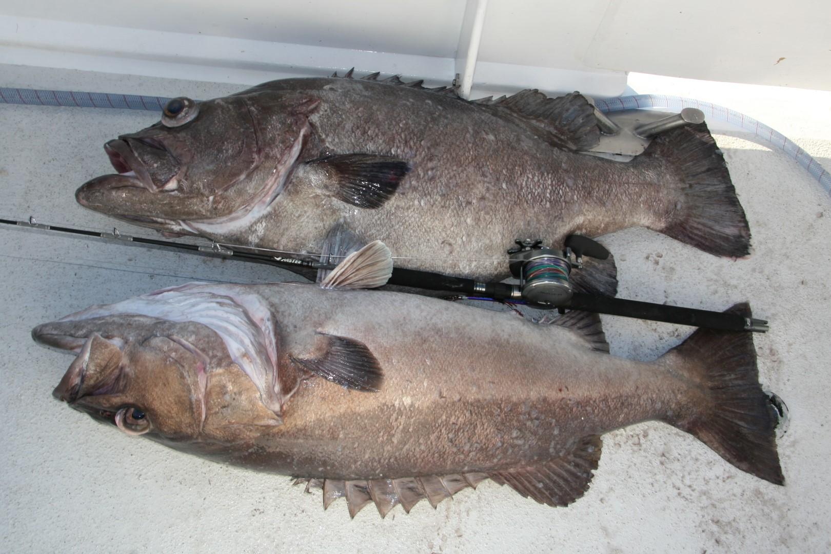 Deep water Duo