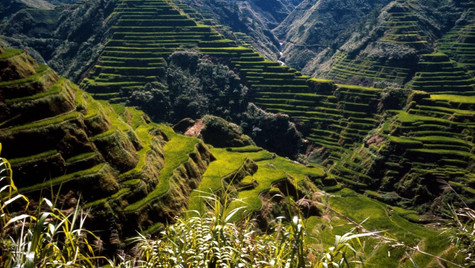 Banawe Rice Terraces.jpg
