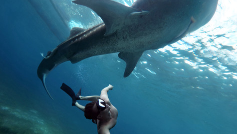 Swimming with whales in Cebu