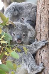 Taronga Zoo, Australia