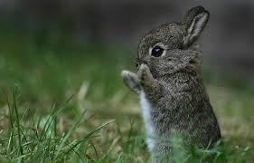 The Trust Technique - According to a Rabbit
