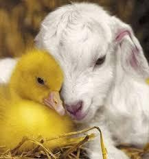 Animals' Compassion - Inspiring Stories
