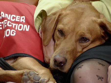 Dogs Detecting Cancer