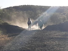 Afton ranch great.jpg