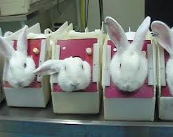Animal Experiments in Labs - What Have We Learned?