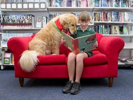 Therapy Animals - Animal Assisted Therapy Visits