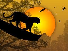 Power Animals & Animal Messengers