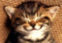 smile kittenjpg.jpg