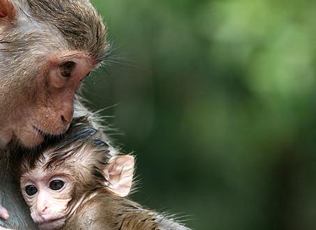 Evidence of Animal Empathy & Sense of Fairness