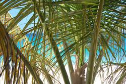 Anguilla Beach and tree