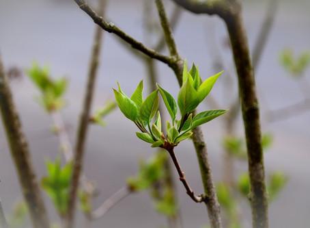 Spring Spruce-Up