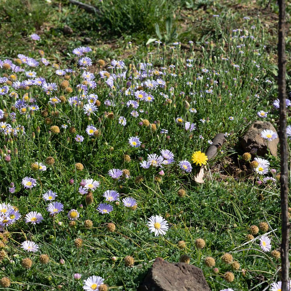 Week 10 - Wildflowers