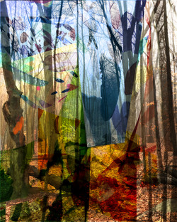 Gubbay_Diana_Cathedral_Forest