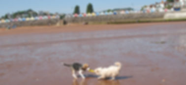 Bentley made a friend on Goodrington Sands